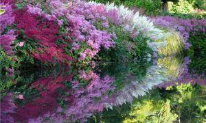Цветы для тенистых уголков вашего сада