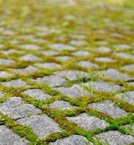 Дизайн японского сада, дорожки