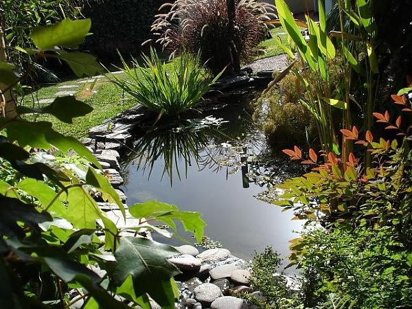 Пруд в саду в форме овала