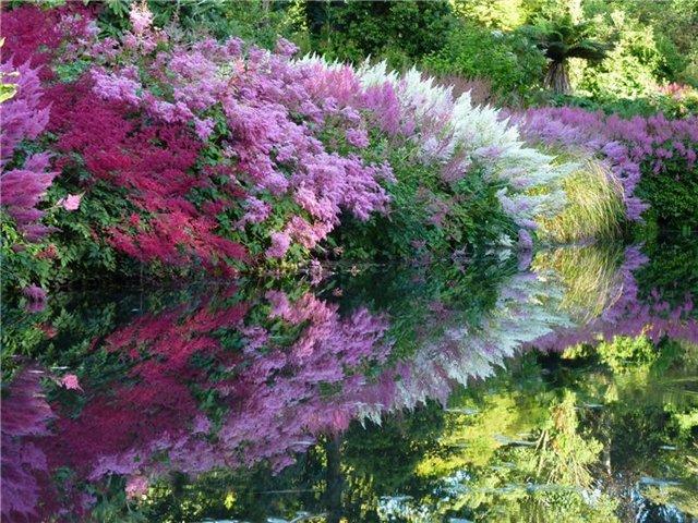 Цветы для тенистого сада фото