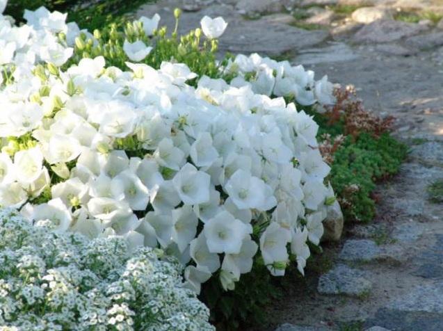 Свежий интерьер дома: 30 зеленых уголков для любителей растений