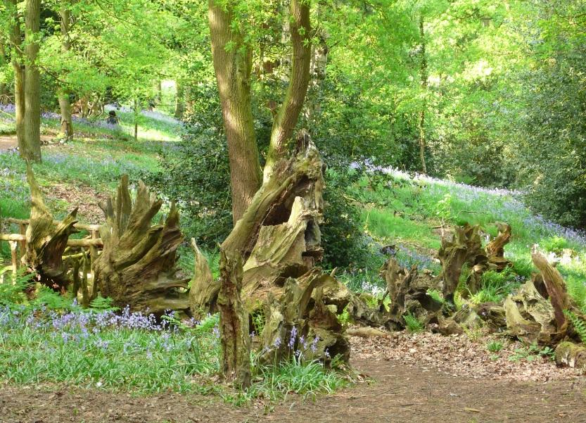 Сад корней своими руками 41