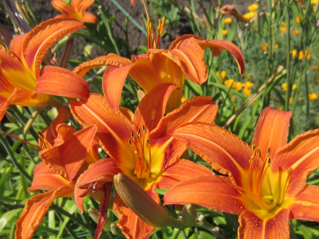 Удивительные цветы мира и названия 76